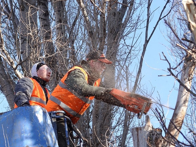 about-tree-removal-north-york-640