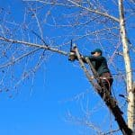 tree-removal-north-york-home